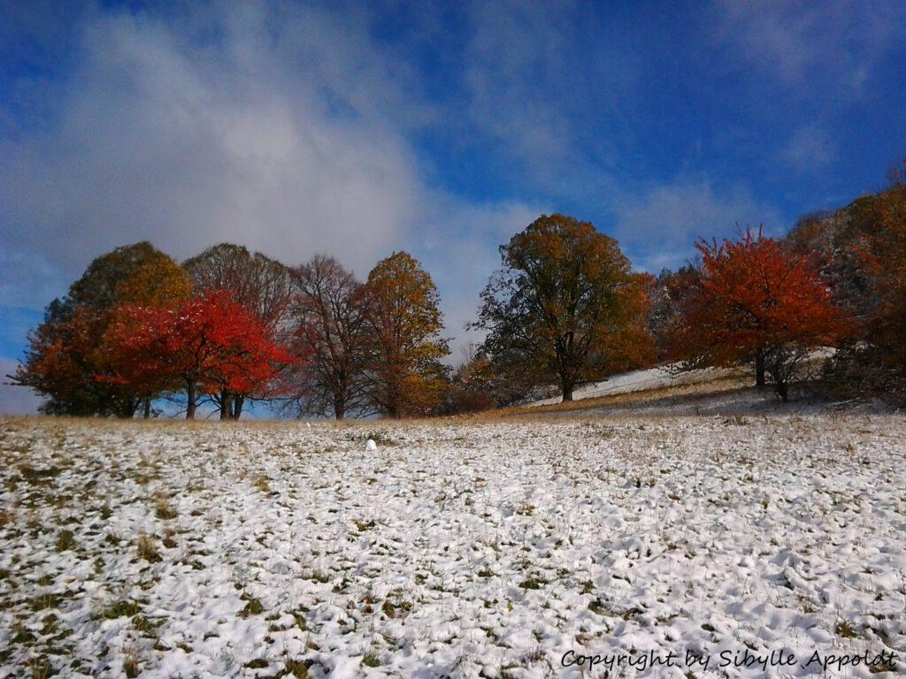 Herbstbäume im Schnee